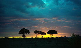 Masai Mara solnedgang
