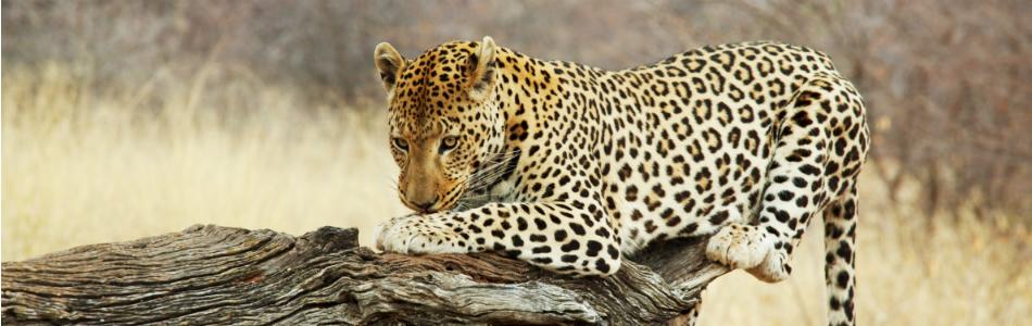 dyrerne i tanzania